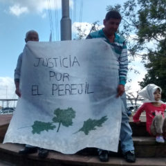 Justicia por el perejil
