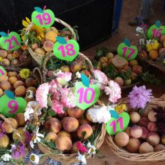 Un Festival por la Soberanía Alimentaria